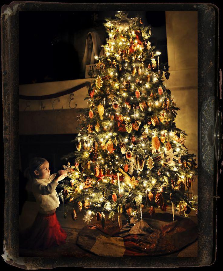 Christmas Tree San Jose: 1000+ Images About Christmas Trees On Pinterest