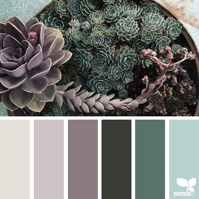 today's inspiration image for { succulent hues } is by @mysuburbanfarm ... thank you, Ainslee, for another incredible #SeedsColor image share!