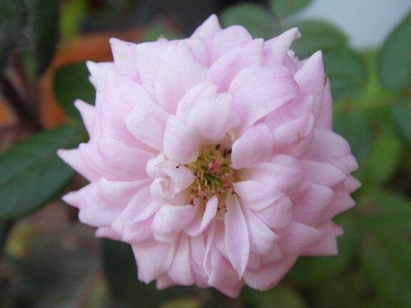 #flores del mundo