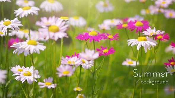 Beautiful Summer Flowers in a Garden Video Background.