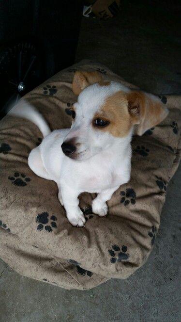 Puppy found: