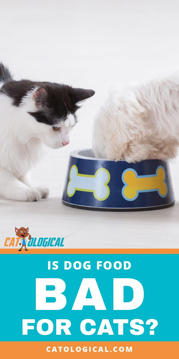 Is Dog Food Bad For Cats Or Can They Eat It Are Feline Diets