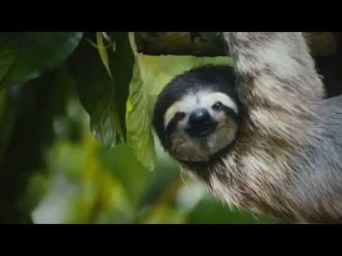 Sloth Sanctuary of Costa Rica — Since 1992, the first advocate for sloths in Costa Rica