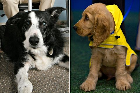Durch Charity for Dogs erhalten Sie qualitatives Premium-Hundetrockenfutter, frei von Getreide und Füllstoffen! Außerdem unterstützen Sie in Not geratene Hundebesitzer und bewahren Hunde vor dem Tierheim.       #GetreidefreiesHundefutter
