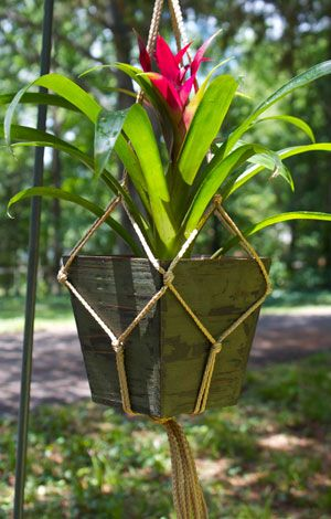 DIY Plant Hanger  Craft a stylish plant hanger with rope and a few knots.