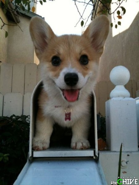 you've got mail...absolutely adorable mail.