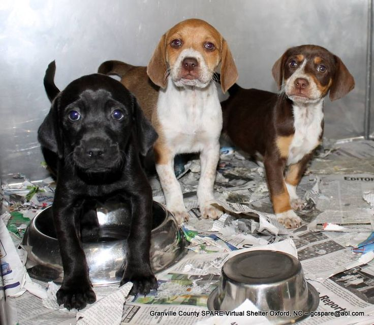 14+ Granville county animal shelter ideas