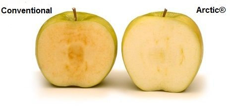 Like the snow-driven landscapes for which they are named, the flesh of Arctic® apples stays crisp and unspoiled!