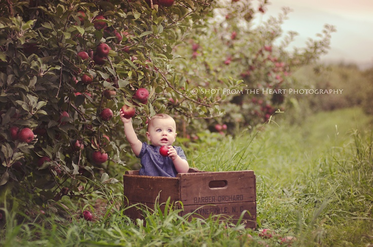 Fall is coming! Apple orchard photography