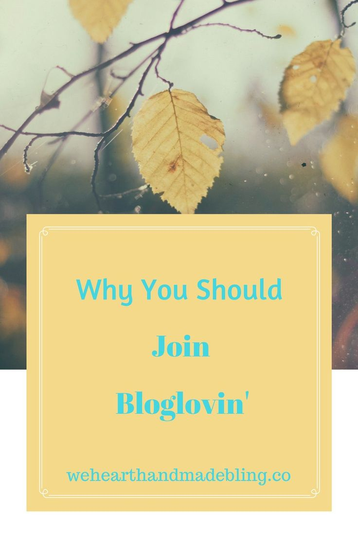 Why you should join Bloglovin'