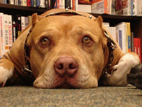 cesar's dog daddy   ... confesó que tuvo un intento de suicidio cuando murió su perro Daddy