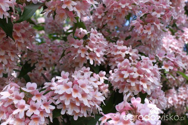 Wszystkiego po trochu - strona 36 - Forum ogrodnicze - Ogrodowisko