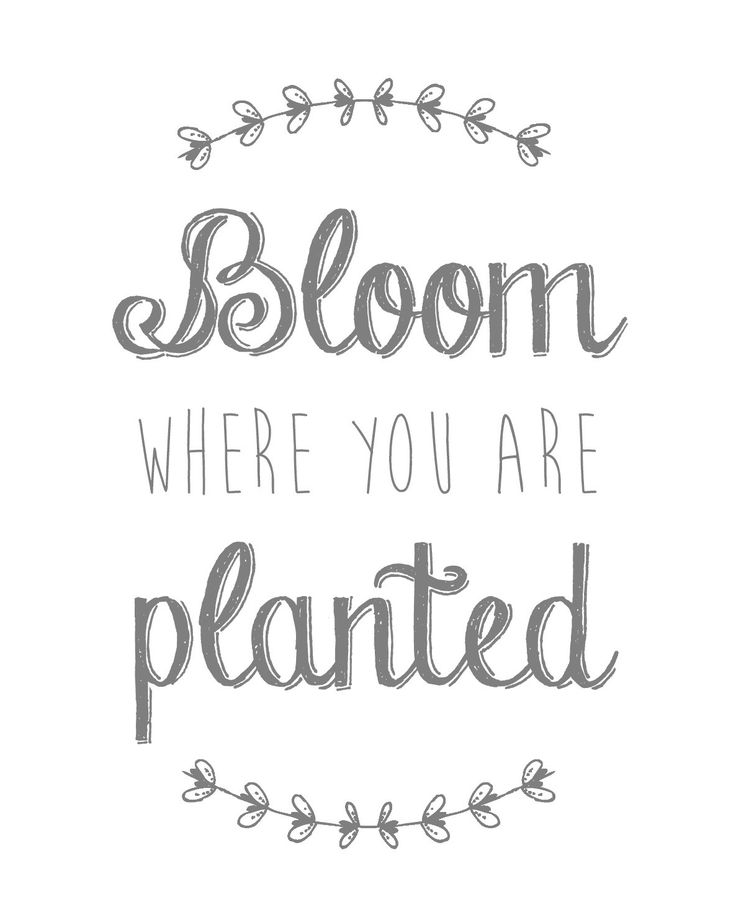 Bloom Where You Are Planted Free 8x10 Printable