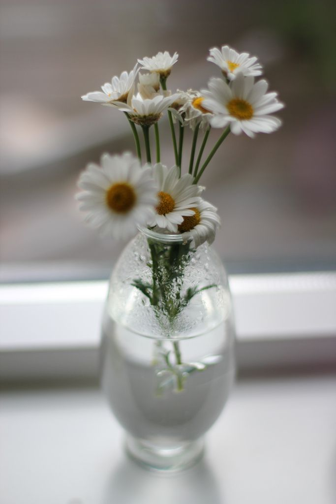 the daisy cottage .. X ღɱɧღ ||