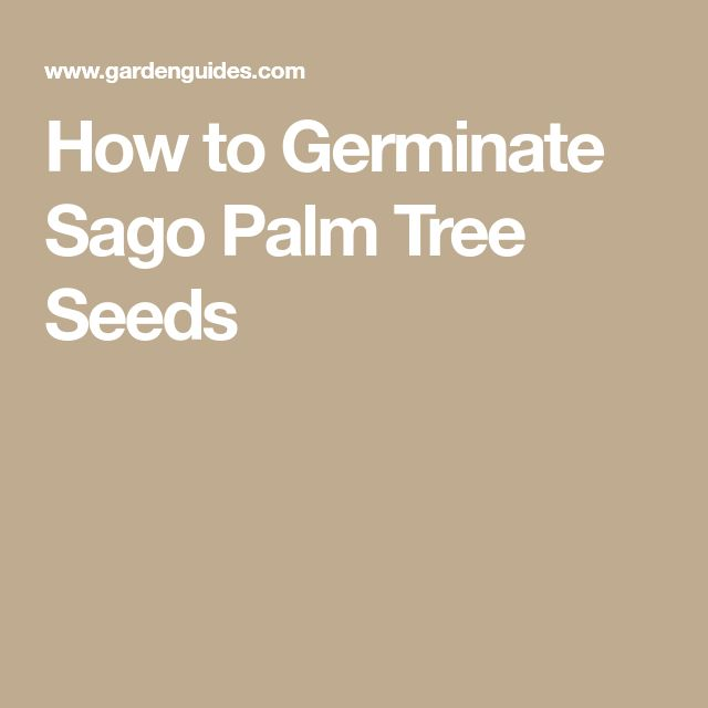 How to Germinate Sago Palm Tree Seeds