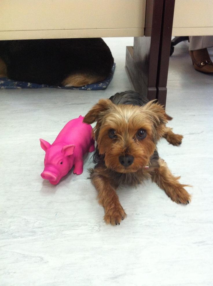 A minha Maggie tem um novo amigo!!! Chama-se Miss Piggy lol e tem quase o tamanho dela e faz oinc oinc