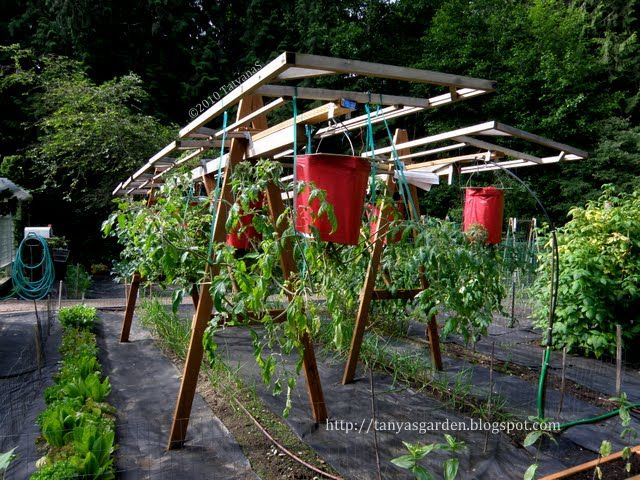 20 best images about upside down gardens on pinterest for Hanging vegetable garden ideas