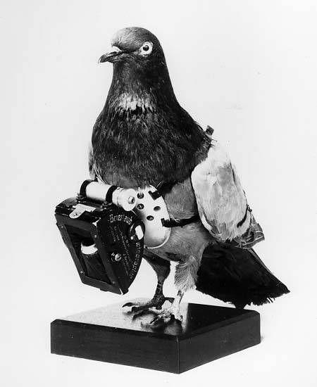 Des pigeons photographes pour la reconnaissance aérienne. Cette technique de photographie aérienne a été inventée par l'apothicaire Allemand Julius Neubronner en 1907.