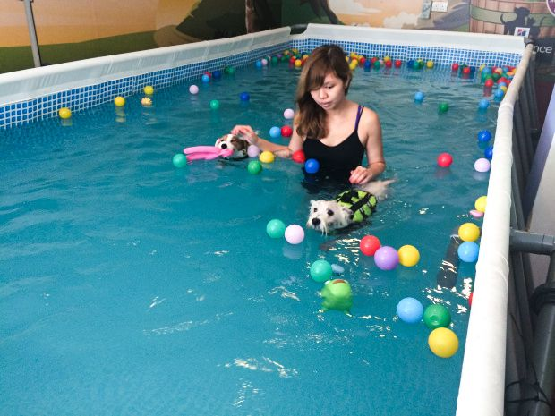 6 Dog Swimming Pools In Singapore | Pet Stop Indoor Pool | Vanillapup