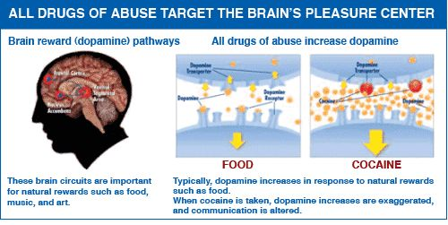 All drugs of abuse target the brain's reward system by flooding the circuit with the chemical dopamine.
