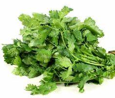Les feuilles de coriandre, une puissante plante condimentaire qui filtre les…
