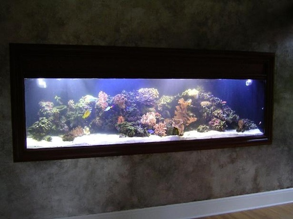 Fish tank in the wall basement ideas pinterest the for Fish tank wall
