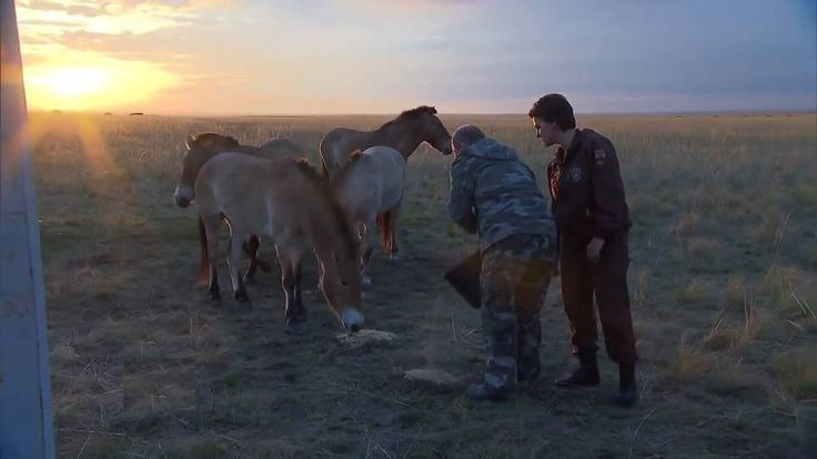 Putin Visits Reserve For Wild Horses And Sets 6 Of Them Free! (VIDEO)