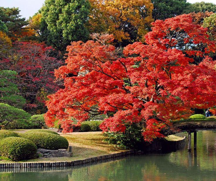 """Good Morning John In Japanese : """"good morning japan ️ beautiful places pinterest"""