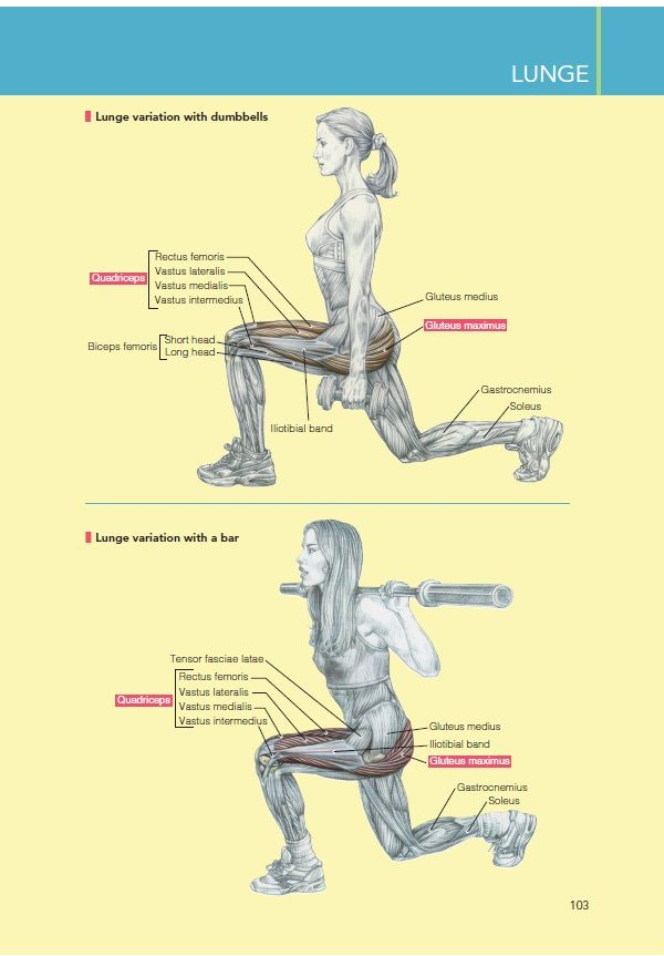 frederic delavier strength training anatomy workout pdf