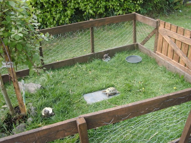 New outdoor tortoise enclosure - Reptile Forums