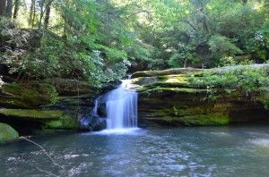 Sipsey Wilderness. One of the most beautiful places to hike in Alabama.