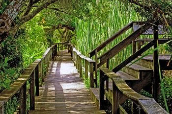 Sea Pines Forest Preserve Boardwalk. Where else can you go and take a walk in the woods in the morning and a stroll on the beach in the afternoon?