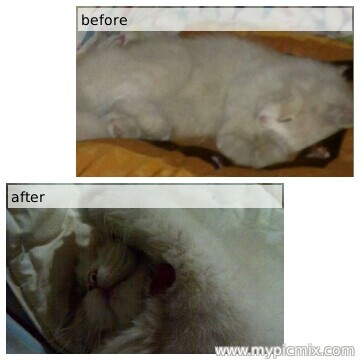 "Before-after ""Milo"""
