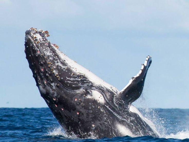 Whale watching - Lord Howe Island, NSW, Australia