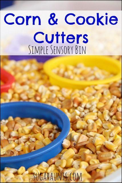 "Corn sensory bin with cookie cutters- Simple sensory bin idea for a letter ""c"" theme. From Sugar Aunts"