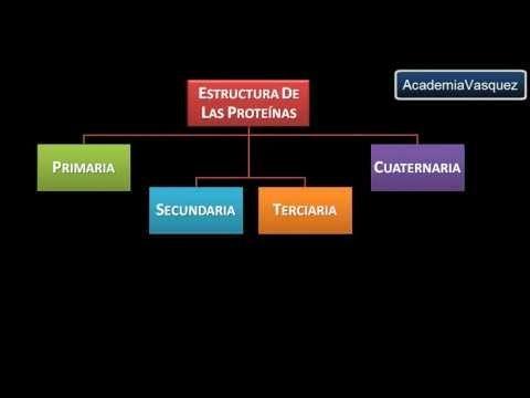 Estructura y Organización de las Proteínas