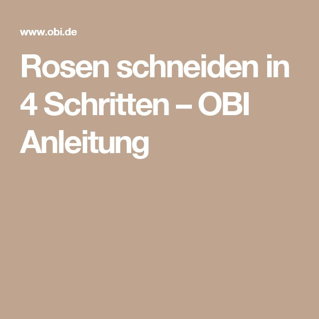 25 best ideas about rosen schneiden on pinterest rosengarten rosen and baum schneiden. Black Bedroom Furniture Sets. Home Design Ideas
