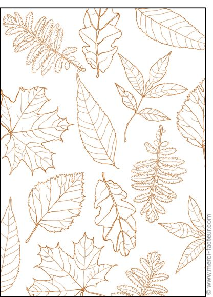 #automne #feuilles #illustration #couleur #autumn #leaves #color #plantes #café #cards #snail #autumn #plants #leaves #mushroom #coffee     Carte Feuilles d'automne en octobre pour envoyer par La Poste, sur Merci-Facteur !