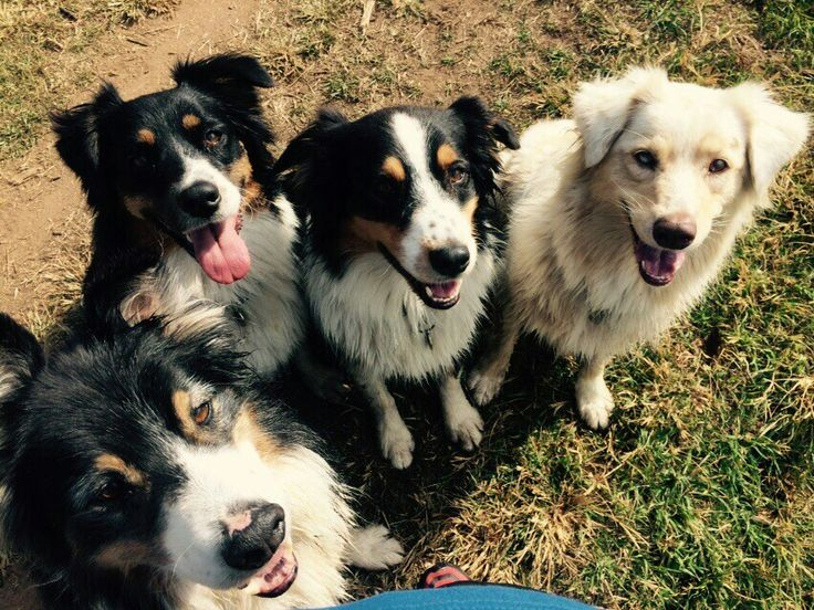 Sherlock, Layla, Aragorn and Jinja