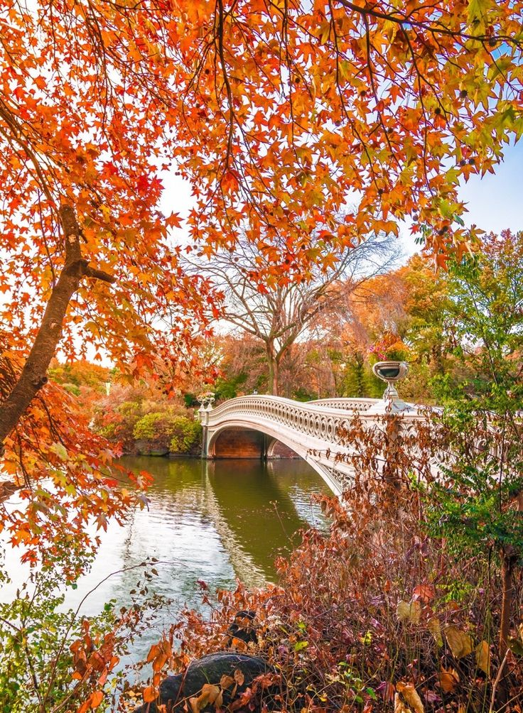 Fall foliage around the Bow Bridge in Central Park by @nyclovesnyc by newyorkcityfeelings.com - The Best Photos and Videos of New York City including the Statue of Liberty Brooklyn Bridge Central Park Empire State Building Chrysler Building and other popular New York places and attractions.