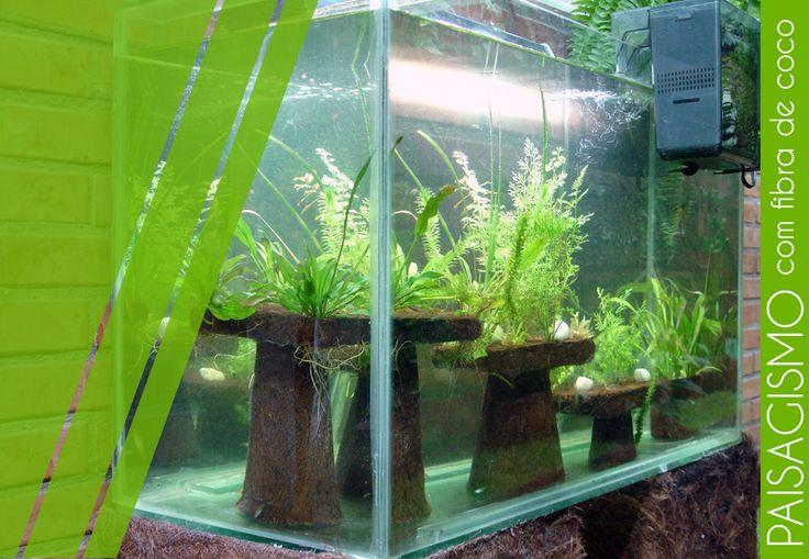 Aquarismo com ornamentos feitos a partir da fibra de coco. #CocoVerde #FibraDeCoco #Aquarismo #RioDeJaneiro #Reciclagem