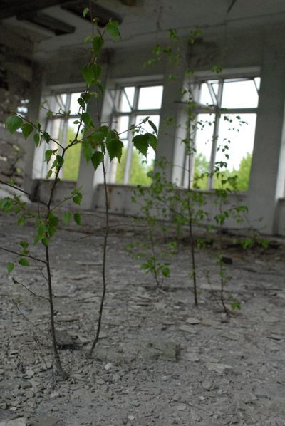 Chernobyl, Ukraine  In less than 28 years, nature has reclaimed Pripyat and all the deserted villages.