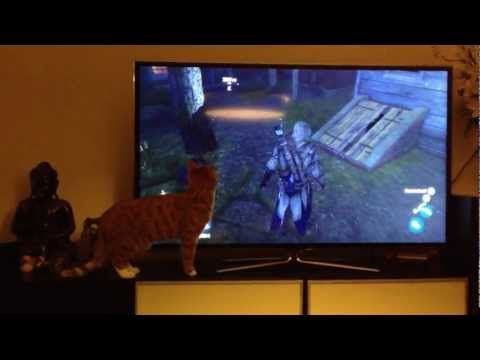 Assassin's Creed confuses cat