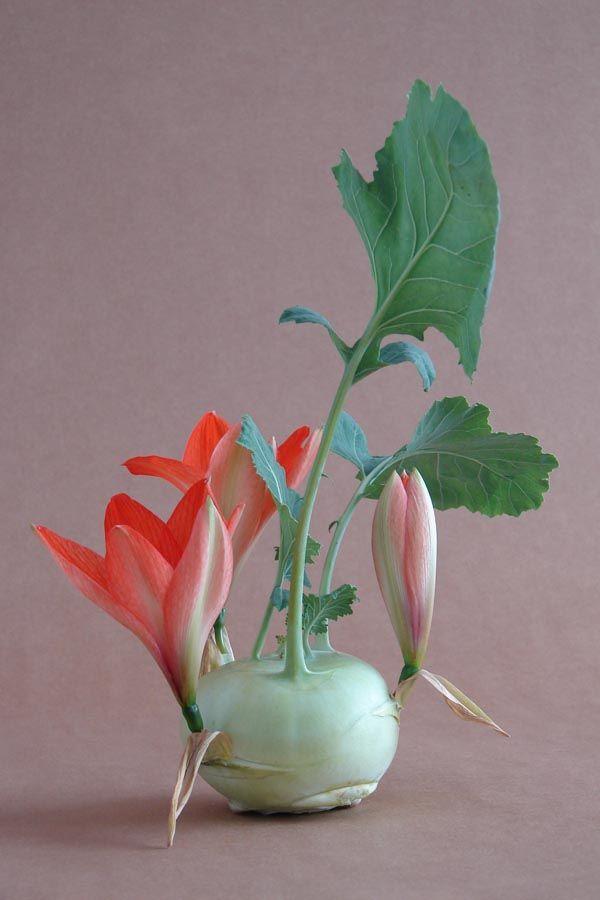 engineered hybrid - photo andreas verheijen- Un florista que fue mucho más allá. Manipulación en su máximo esplendor.