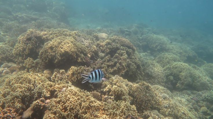 I found Dori! #Nhatrang #coralreef