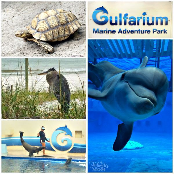 Gulfarium Marine Adventure Park - Things to do in Destin