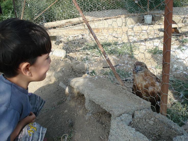 Face & baby & Eagle