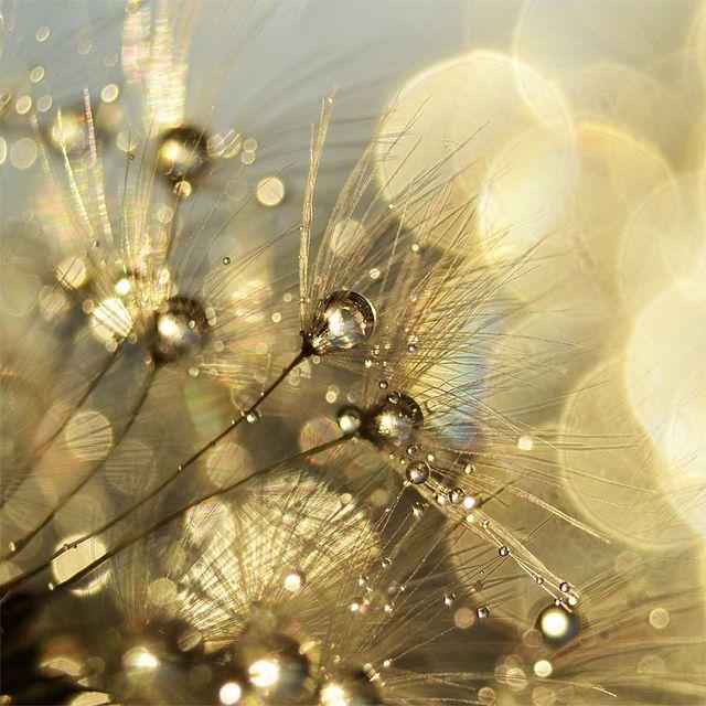 http://www.bestfreewebresources.com/wp-content/uploads/2012/01/bokeh-photo-31.jpg
