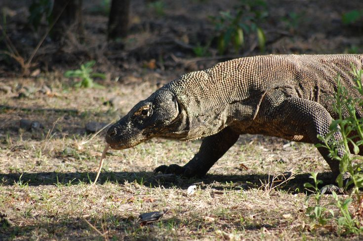 Auf Bootstour im Komodo - Nationalpark «oder: Drachenjagd im Paradies»    Schon die Anreise nach Labuan Bajo ist ein Abenteuer für sich. Am Flughafen in Denpasar werden wir zu Fuß zu einer Mini-Maschine geführt, ohne genau zu wissen, ob wir jemals am Ziel ankommen würden, weil
