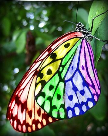 ~~Rainbow Butterfly by ~MarchBreeze~~